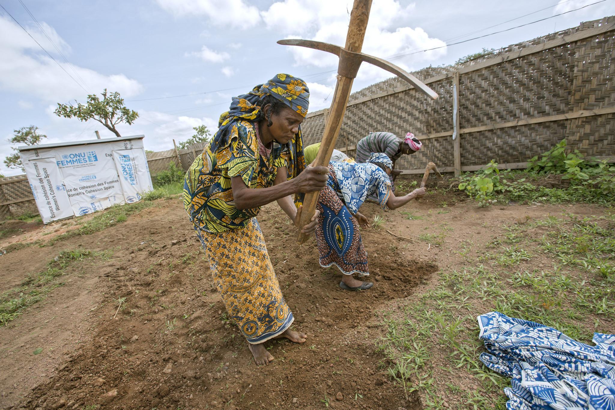 Kamerun - kasvimaa