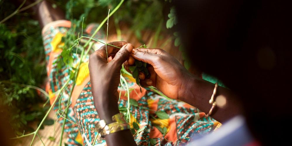 Ilmastoälykäs maatalous parantaa Malin naisten toimeentuloa