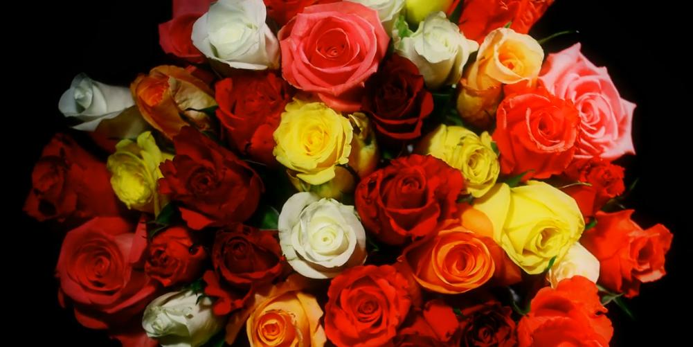 Ruusut eivät suojele väkivallalta