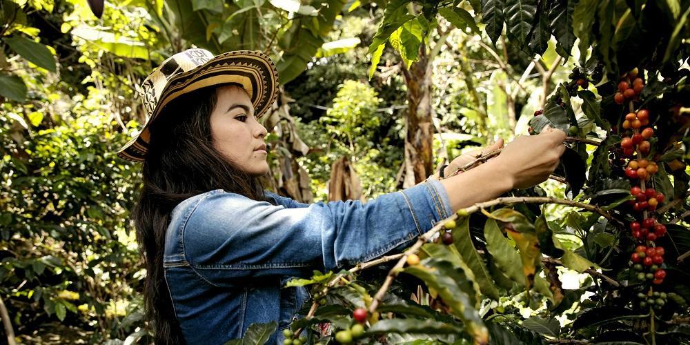 Kahvia, rauhaa ja naisten oikeuksia Kolumbiassa